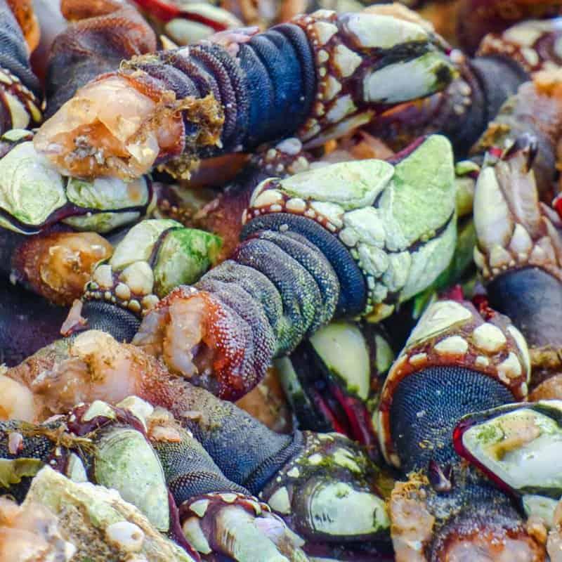 Percebas (морские уточки)