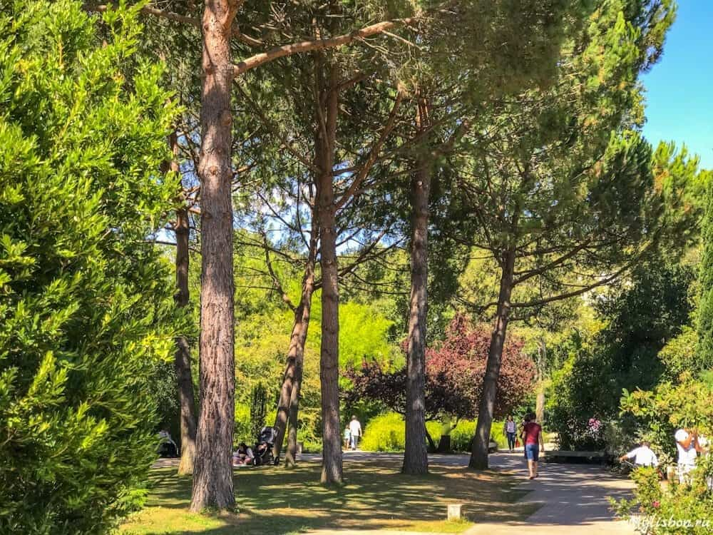Парк Калуста Гулбенкяна в Лиссабоне